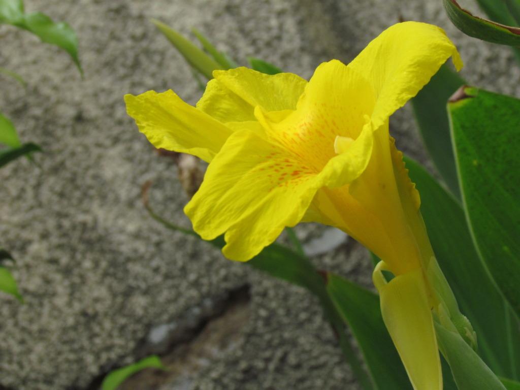 azan flower
